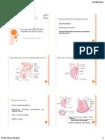 Funções reprodutivas e hormonais masculinas aula 1