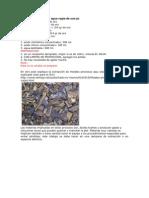 81148275 Refinacion de Oro Por Agua Regia de Una Pc