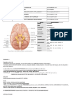 Final Anatomia 2