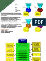 Glicosidi Cianogenetici