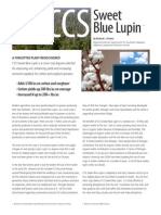 Sweet Blue Lupin Growing Guide