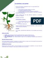 58939838 Las Plantas y Sus Partes Dcto[1]
