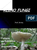 Reino Fungi NG