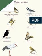 25 Aves Comunes en Salamanca
