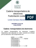 Cadena Transportadora de Electrones y Fosforilacion Oxidativa