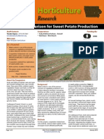 Mulching Comparison for Sweet Potato Production