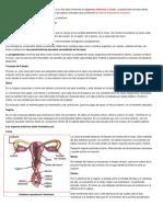 embriologia 1.docx