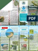 Bosque Seco Guanica