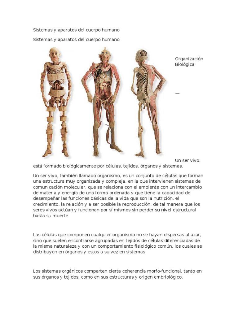 Sistemas y Aparatos Del Cuerpo Humano | Órgano (anatomía) | Organismos |  Prueba gratuita de 30 días | Scribd