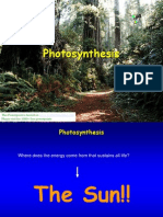 Photosynthesis 5