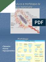 Ultraestrutura e morfologia da célula bacteriana(2)