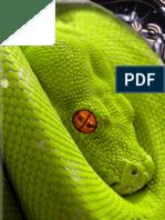 Top 10 cei mai veninosi serpi din lume
