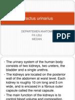 Anatomi Tractus Urinarius
