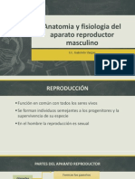 Anatomia y Fisiologia Del Aparato Reproductor Masculino3