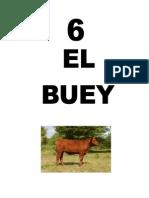Leccion6BUEY