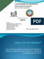 Expo, Lipidos