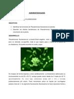 Pseudomonas