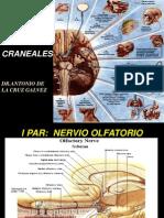 3. Pares Craneales I - I Al VI