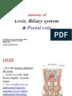 Liver & Portal Vein