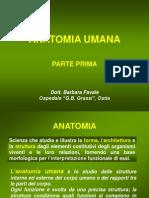01 Anatomia