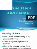 Marine Flora and Fauna.2