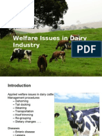 dairy cow welfare