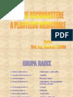 12337368 Ghid de Recunoastere a Plantelor Medicinale
