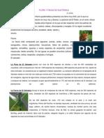 Flora y Fauna de Paises de Centroamerica