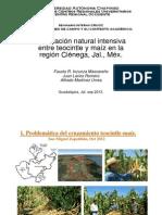 Hibridación teocintle-maíz, Ciénega, Jal; sep 2013