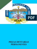 65584150-1-Clase-Morfologia-Dental.pdf