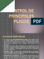 Control de Principales Plagas y Enfermedades Del Cacao