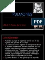 Exposicion de Pulmones