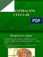 Resp. Celular