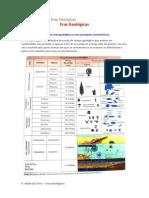 Características das Eras Geológicas.docx