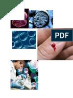 stem cells investigation.docx