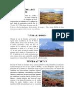 TUNDRA AMÉRICA DEL NORTE