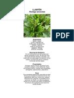 plantas medicinales biologia