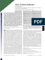 2007 PNAS Cytoskeletal-Dynamics