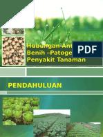 Gejala helminthosporium turcicum.