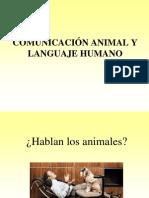 Animal Communication vs Human Language