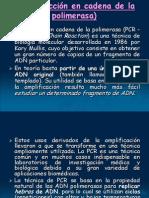 PCR.ppt