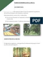 Actividades Economicas en La Selva