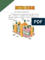 Estructura_y_funciones02