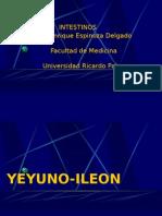 6ta Clase Abdomen - Yeyuno, Ileon - Dr. Espinoza