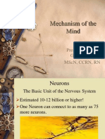 Anatomy and Physiology of the Brain