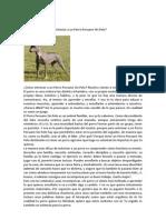 Entrenar a Un Perro Peruano Sin Pelo