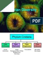 006 Cnidarian Diversity