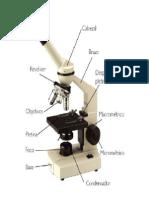 el microscopio y sus partes.docx