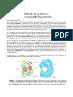 07. Estructuras citoplasmáticas
