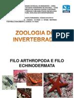 zoologia artropodes